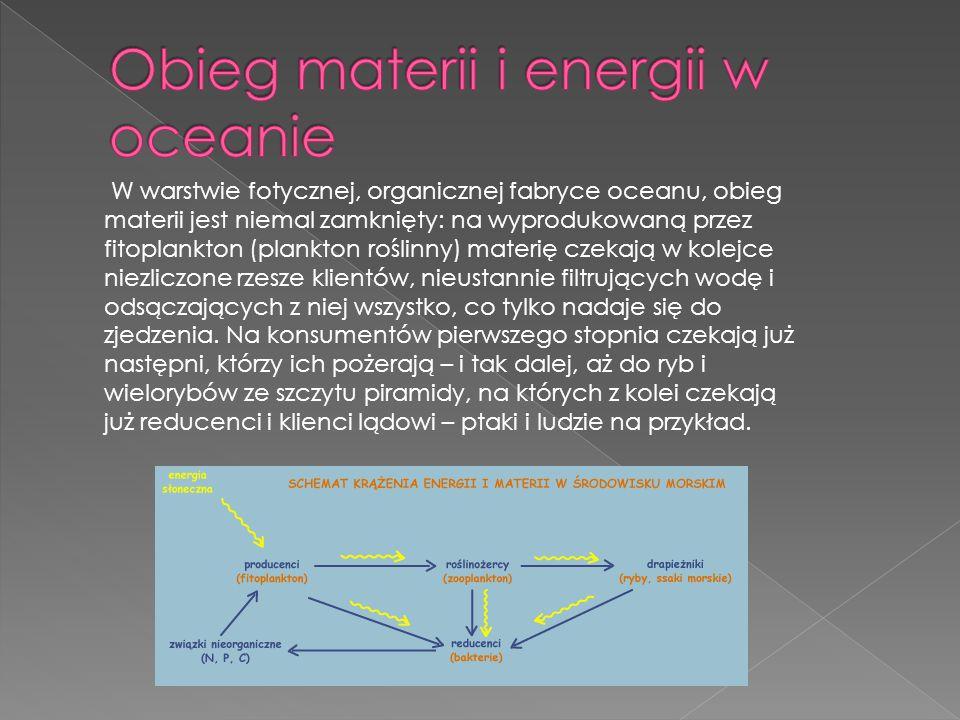 W warstwie fotycznej, organicznej fabryce oceanu, obieg materii jest niemal zamknięty: na wyprodukowaną przez fitoplankton (plankton roślinny) materię