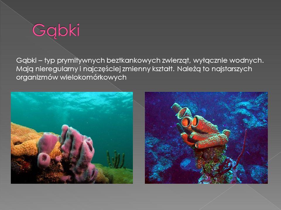Gąbki – typ prymitywnych beztkankowych zwierząt, wyłącznie wodnych. Mają nieregularny i najczęściej zmienny kształt. Należą to najstarszych organizmów