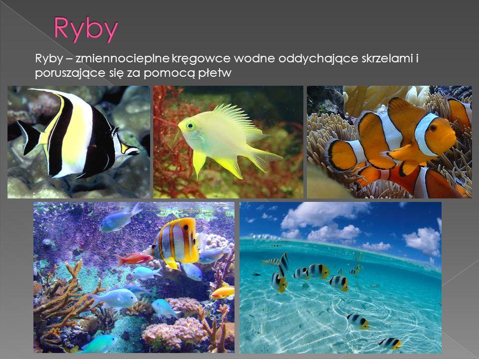 Ryby – zmiennocieplne kręgowce wodne oddychające skrzelami i poruszające się za pomocą płetw
