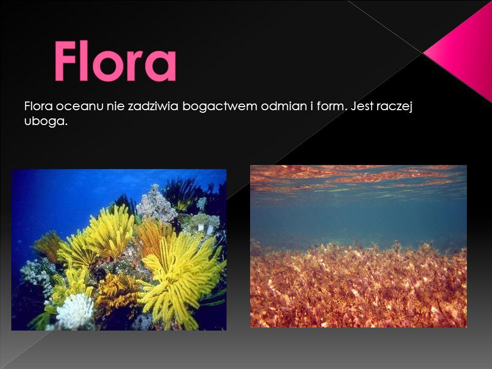 Flora oceanu nie zadziwia bogactwem odmian i form. Jest raczej uboga.