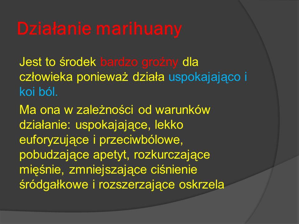 Działanie marihuany Jest to środek bardzo groźny dla człowieka ponieważ działa uspokajająco i koi ból.