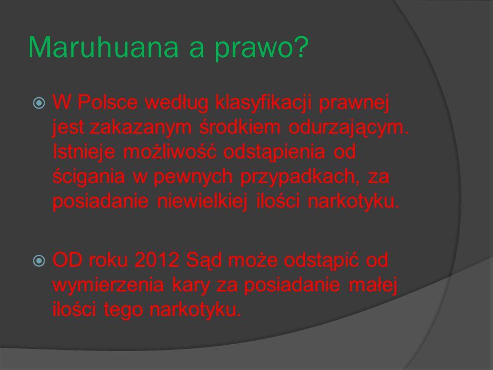 Maruhuana a prawo?  W Polsce według klasyfikacji prawnej jest zakazanym środkiem odurzającym. Istnieje możliwość odstąpienia od ścigania w pewnych pr