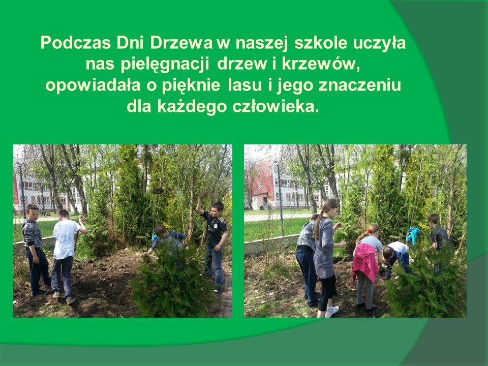 Podczas Dni Drzewa w naszej szkole uczyła nas pielęgnacji drzew i krzewów, opowiadała o pięknie lasu i jego znaczeniu dla każdego człowieka.