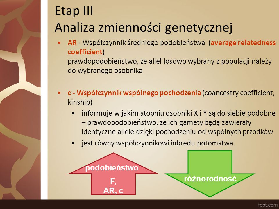 Etap IV Przodkowie i założyciele Wkład genetyczny (genetic contribution) udział genów danego osobnika w puli genów populacji badanej - prawdopodobieństwo, że losowo wybrane z populacji geny pochodzą od danego osobnika Założyciel - osobnik o nieznanych rodzicach Przodek - osobnik o dużym wkładzie genetycznym dla populacji, niekoniecznie założyciel f e - efektywna liczba założycieli (effective number of founders) f a - efektywna liczba przodków (effective number of ancestors) minimalna liczba założycieli/przodków niezbędna do wyjaśnienia całej zmienności genetycznej w obrębie populacji