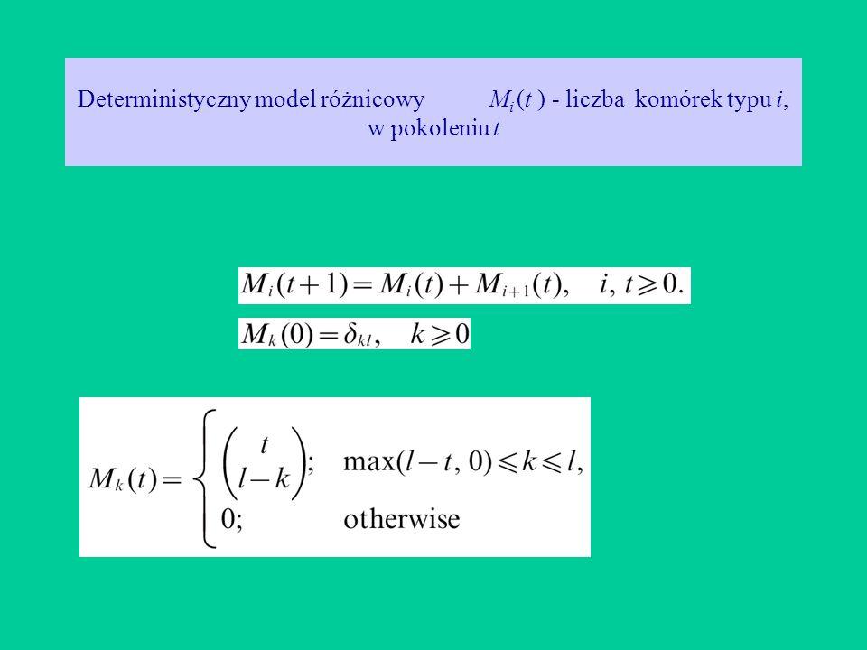 Deterministyczny model różnicowy M i (t ) - liczba komórek typu i, w pokoleniu t