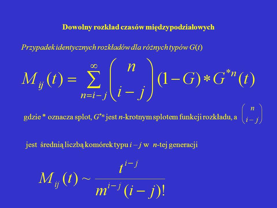 Dowolny rozkład czasów międzypodziałowych Przypadek identycznych rozkładów dla różnych typów G(t) jest średnią liczbą komórek typu i – j w n-tej generacji gdzie * oznacza splot, G *n jest n-krotnym splotem funkcji rozkładu, a