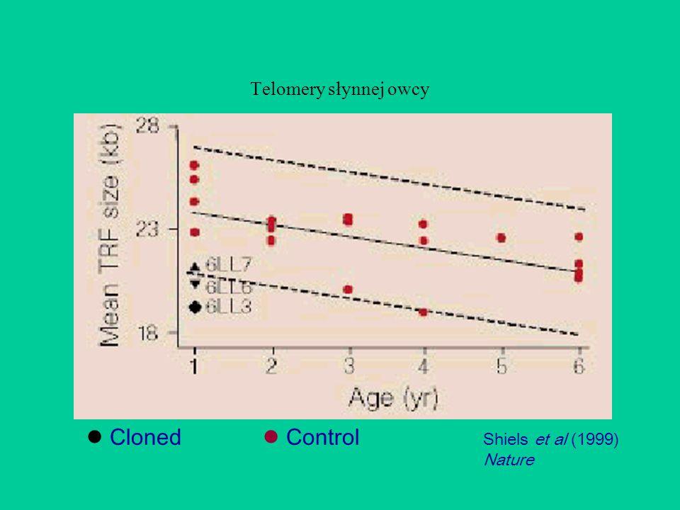 Shiels et al (1999) Nature Cloned Control Telomery słynnej owcy