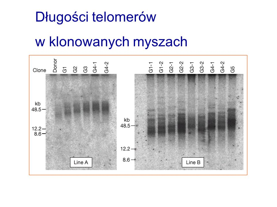 Telomeraza Tromans (2000) Nature Cell Biology