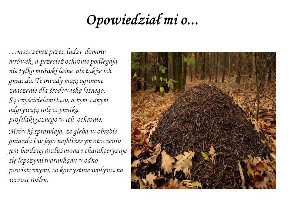 To on jako pierwszy powiedział mi, że grzybów trujących nie należy niszczy ć tylko dlatego, że dla nas są niejadalne. Niektóre zwierzęta żywią się wła