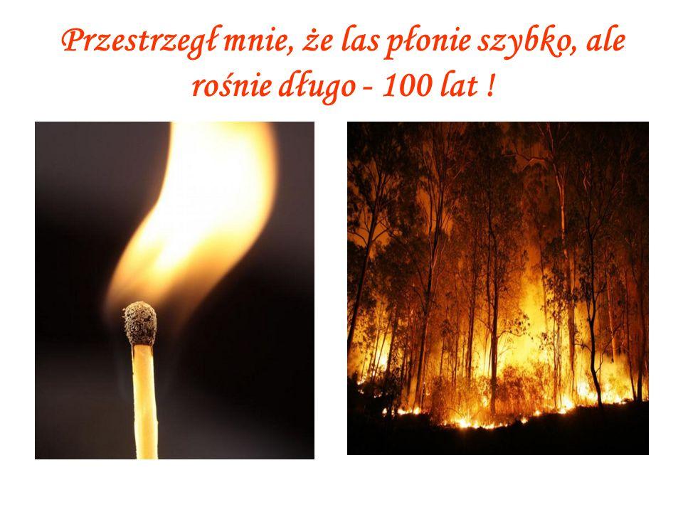 Przestrzegł mnie, że las płonie szybko, ale rośnie długo - 100 lat !