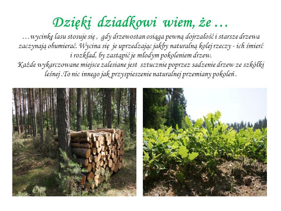 Dzięki dziadkowi wiem, że … …wycinkę lasu stosuje się, gdy drzewostan osiąga pewną dojrzałość i starsze drzewa zaczynają obumierać.