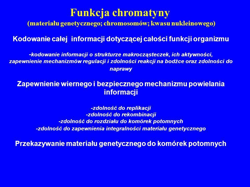 Funkcja chromatyny (materiału genetycznego; chromosomów; kwasu nukleinowego) Kodowanie całej informacji dotyczącej całości funkcji organizmu - kodowan