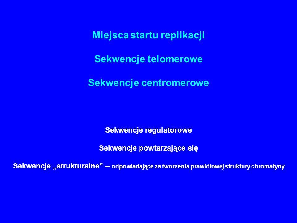 """Miejsca startu replikacji Sekwencje telomerowe Sekwencje centromerowe Sekwencje regulatorowe Sekwencje powtarzające się Sekwencje """"strukturalne"""" – odp"""