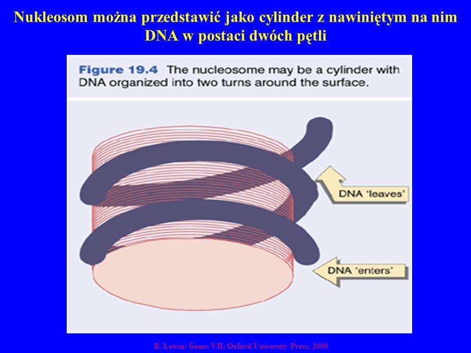 Nukleosom można przedstawić jako cylinder z nawiniętym na nim DNA w postaci dwóch pętli B. Lewin; Genes VII; Oxford University Press, 2000