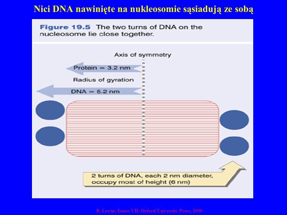 Nici DNA nawinięte na nukleosomie sąsiadują ze sobą B. Lewin; Genes VII; Oxford University Press, 2000