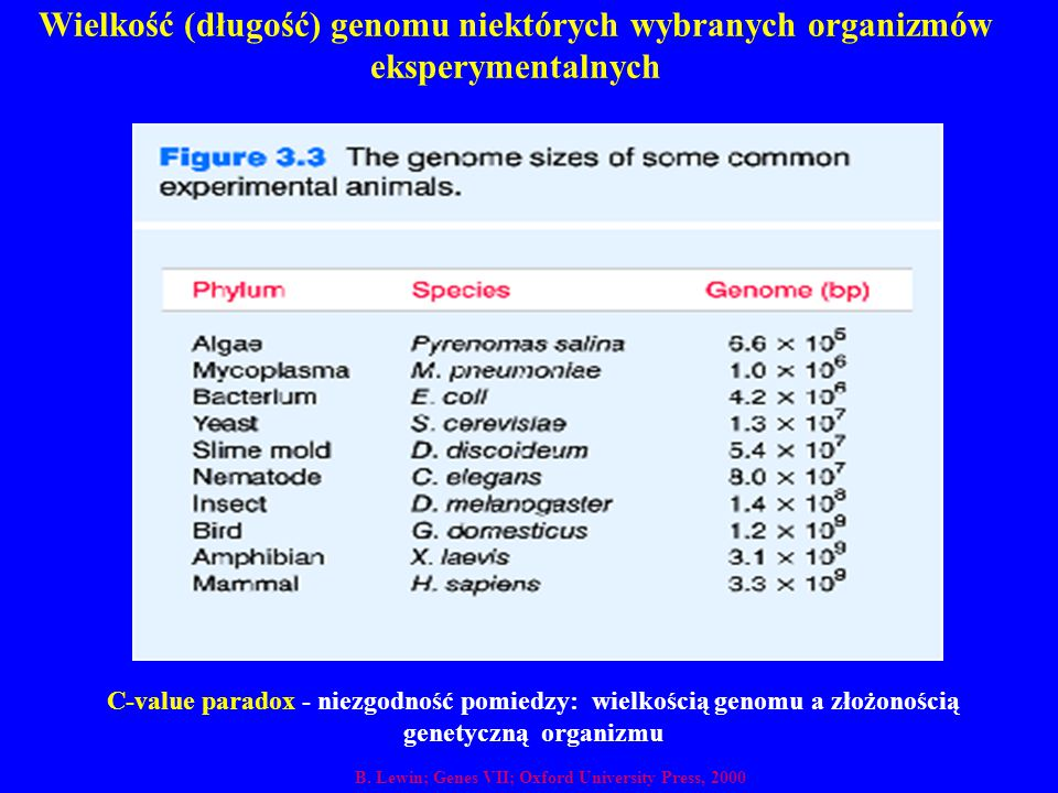 Wielkość (długość) genomu niektórych wybranych organizmów eksperymentalnych C-value paradox - niezgodność pomiedzy: wielkością genomu a złożonością ge