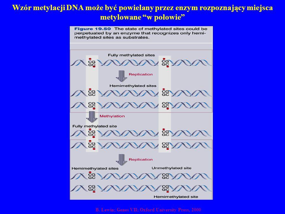 """Wzór metylacji DNA może być powielany przez enzym rozpoznający miejsca metylowane """"w połowie"""" B. Lewin; Genes VII; Oxford University Press, 2000"""