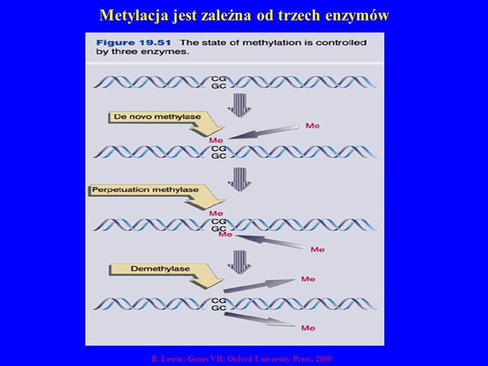 Metylacja jest zależna od trzech enzymów B. Lewin; Genes VII; Oxford University Press, 2000