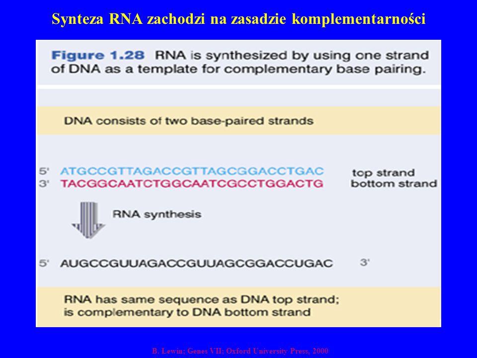 Synteza RNA zachodzi na zasadzie komplementarności B. Lewin; Genes VII; Oxford University Press, 2000