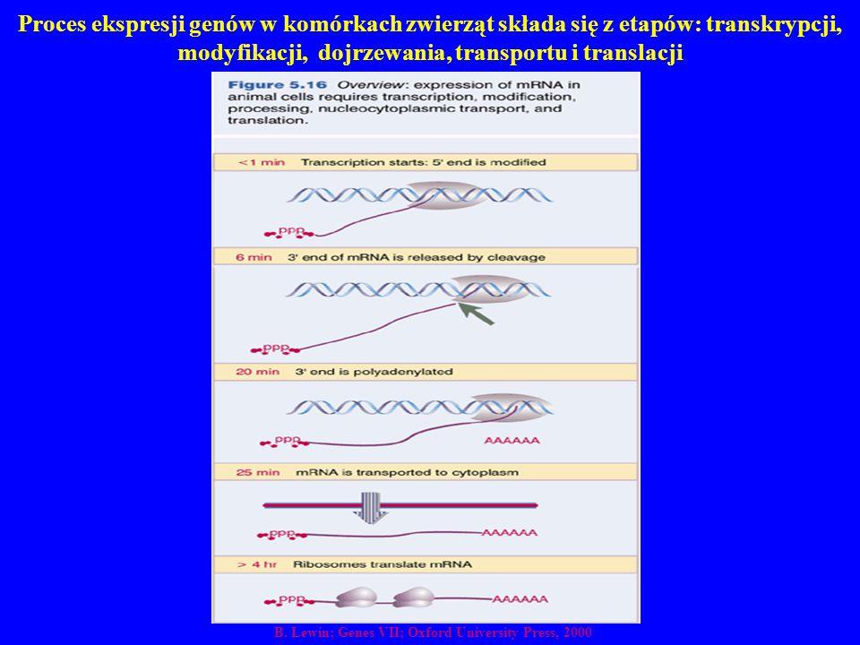 Proces ekspresji genów w komórkach zwierząt składa się z etapów: transkrypcji, modyfikacji, dojrzewania, transportu i translacji B. Lewin; Genes VII;