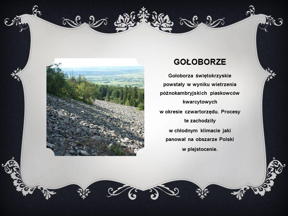 GOŁOBORZE Gołoborza świętokrzyskie powstały w wyniku wietrzenia późnokambryjskich piaskowców kwarcytowych w okresie czwartorzędu.
