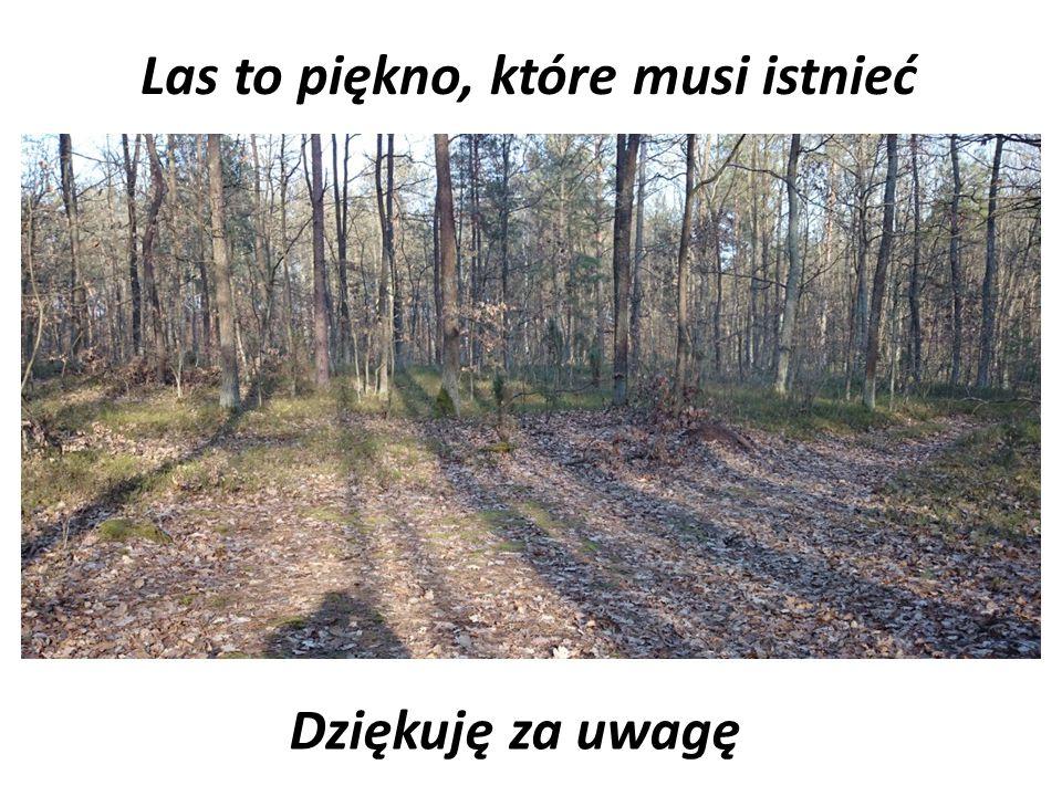 Las to piękno, które musi istnieć Dziękuję za uwagę