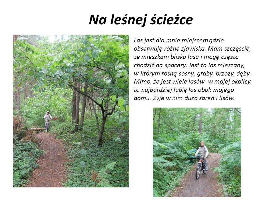 Na leśnej ścieżce Las jest dla mnie miejscem gdzie obserwuję różne zjawiska. Mam szczęście, że mieszkam blisko lasu i mogę często chodzić na spacery.