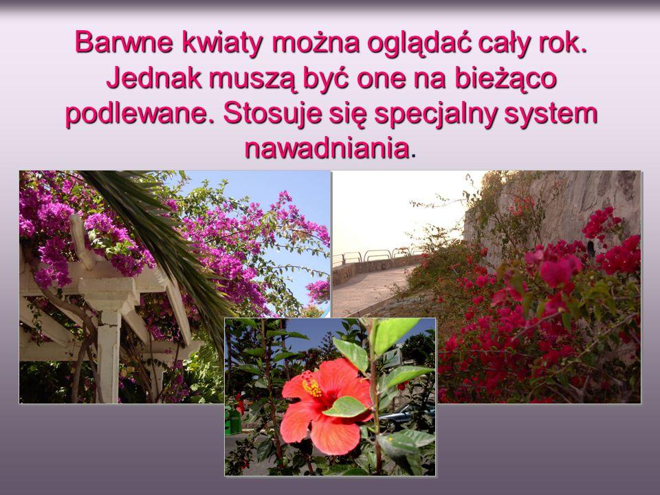 Barwne kwiaty można oglądać cały rok. Jednak muszą być one na bieżąco podlewane. Stosuje się specjalny system nawadniania nawadniania.