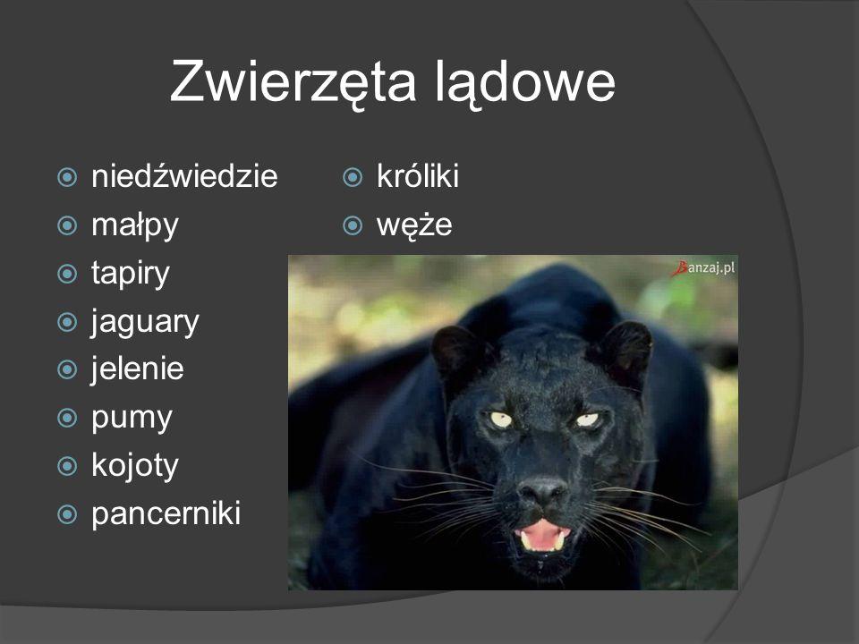 Zwierzęta lądowe  niedźwiedzie  małpy  tapiry  jaguary  jelenie  pumy  kojoty  pancerniki  króliki  węże