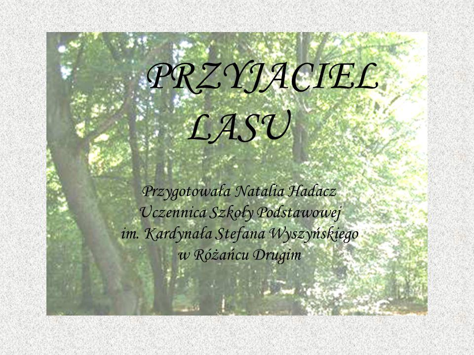 PRZYJACIEL LASU Przygotowała Natalia Hadacz Uczennica Szkoły Podstawowej im.