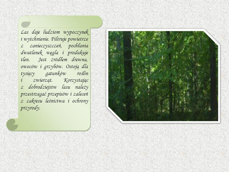 Las daje ludziom wypoczynek i wytchnienie.