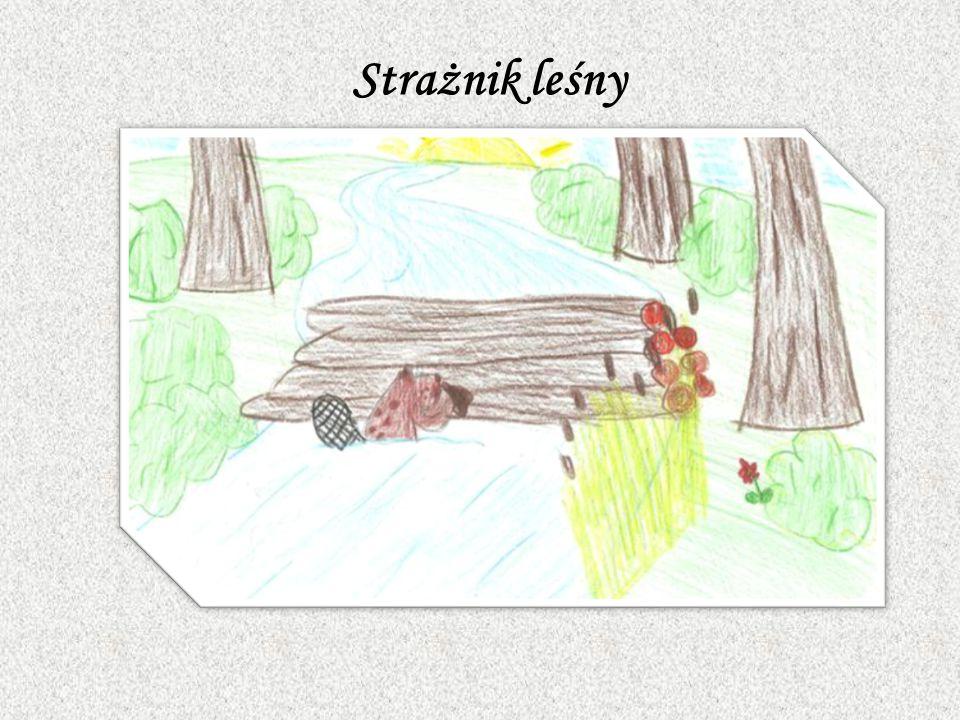 Lasy w Polsce charakteryzują się wysokim zagrożeniem pożarowym. Wczesnowiosenne wypalanie roślinności, nieostrożność z ogniem – to tylko niektóre przy