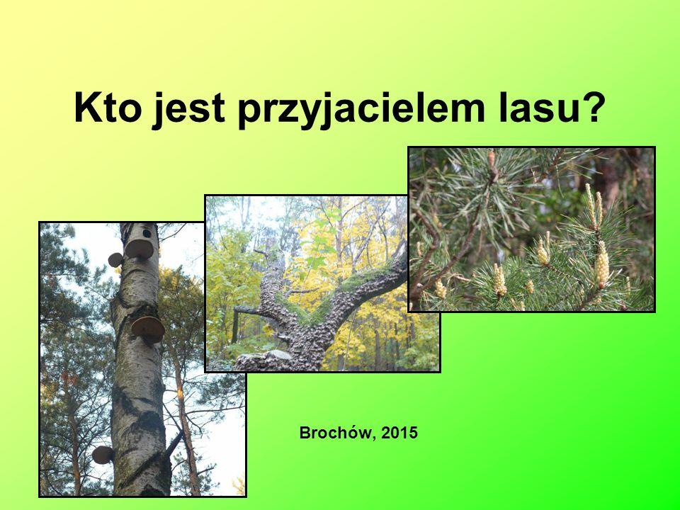 Kto jest przyjacielem lasu? Brochów, 2015