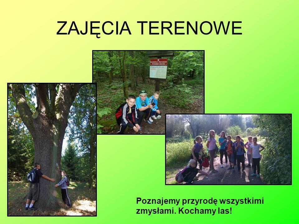 ZAJĘCIA TERENOWE Poznajemy przyrodę wszystkimi zmysłami. Kochamy las!