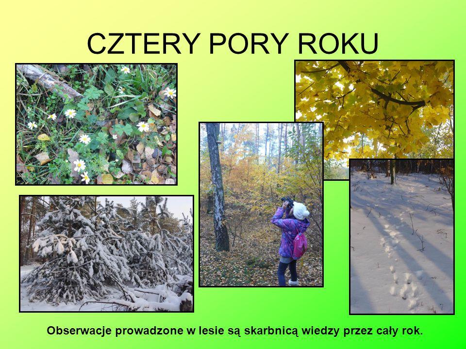 CZTERY PORY ROKU Obserwacje prowadzone w lesie są skarbnicą wiedzy przez cały rok.