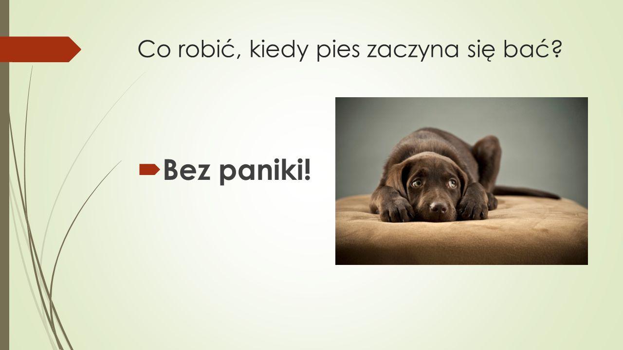 Co robić, kiedy pies zaczyna się bać  Bez paniki!