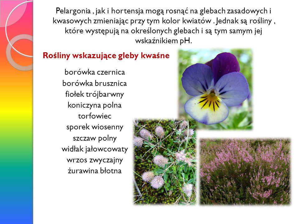 Pelargonia, jak i hortensja mogą rosnąć na glebach zasadowych i kwasowych zmieniając przy tym kolor kwiatów. Jednak są rośliny, które występują na okr
