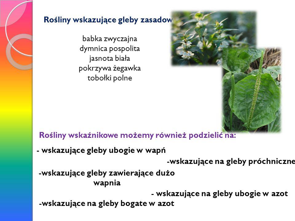 Rośliny wskazujące gleby zasadowe babka zwyczajna dymnica pospolita jasnota biała pokrzywa żegawka tobołki polne Rośliny wskaźnikowe możemy również po
