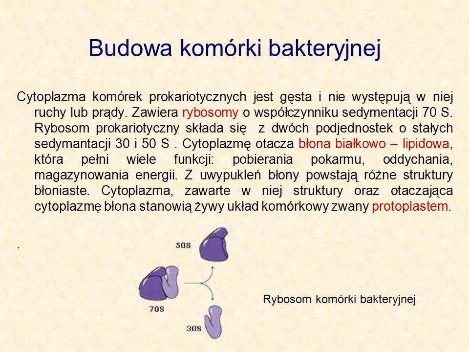 Budowa komórki bakteryjnej Cytoplazma komórek prokariotycznych jest gęsta i nie występują w niej ruchy lub prądy. Zawiera rybosomy o współczynniku sed