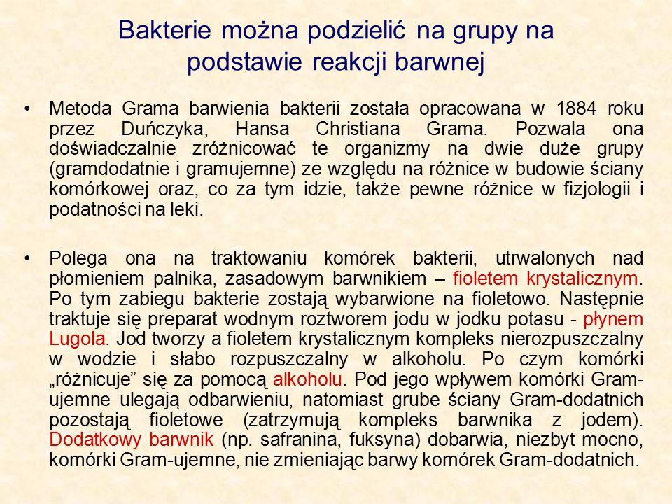 Bakterie można podzielić na grupy na podstawie reakcji barwnej Metoda Grama barwienia bakterii została opracowana w 1884 roku przez Duńczyka, Hansa Ch