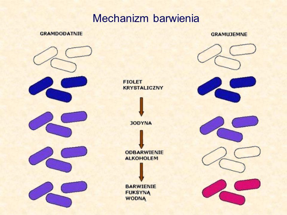 Mechanizm barwienia