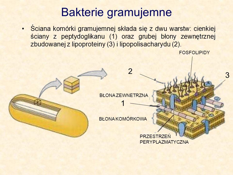 Bakterie gramujemne Ściana komórki gramujemnej składa się z dwu warstw: cienkiej ściany z peptydoglikanu (1) oraz grubej błony zewnętrznej zbudowanej