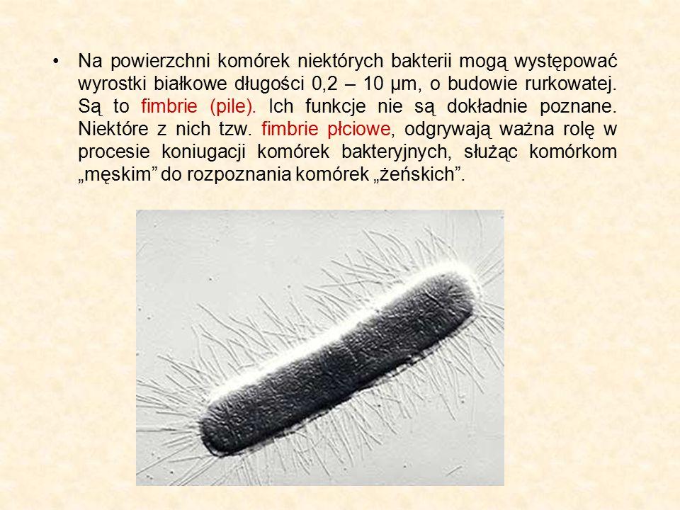 Na powierzchni komórek niektórych bakterii mogą występować wyrostki białkowe długości 0,2 – 10 μm, o budowie rurkowatej. Są to fimbrie (pile). Ich fun