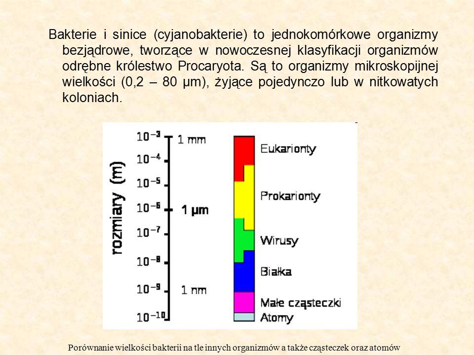 Bakterie i sinice (cyjanobakterie) to jednokomórkowe organizmy bezjądrowe, tworzące w nowoczesnej klasyfikacji organizmów odrębne królestwo Procaryota