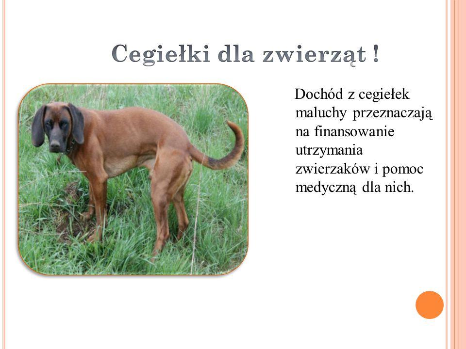 Dochód z cegiełek maluchy przeznaczają na finansowanie utrzymania zwierzaków i pomoc medyczną dla nich.