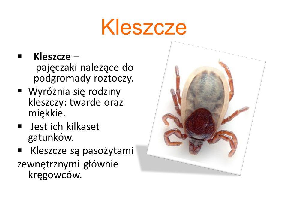 Systematyka kleszczy Domena- Eukarionty Królestwo- Zwierzęta Typ- Stawonogi Podtyp- Szczękoczułkowce Gromada- Pajęczaki Podgromada- Roztocze Nadrząd- Parasitiformes Rząd- Kleszcze