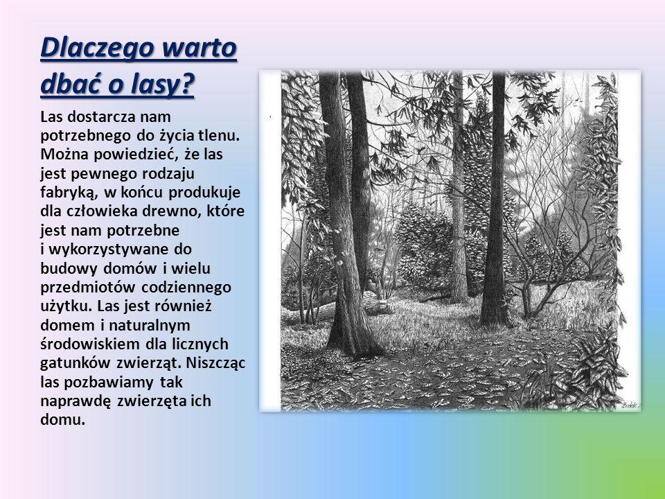Dlaczego warto dbać o lasy? Las dostarcza nam potrzebnego do życia tlenu. Można powiedzieć, że las jest pewnego rodzaju fabryką, w końcu produkuje dla