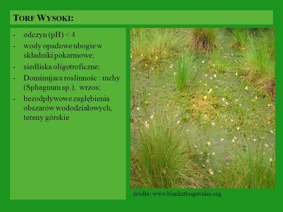 -odczyn (pH) < 4 -wody opadowe ubogie w składniki pokarmowe; -siedliska oligotroficzne; -Dominujaca roslinnośc : mchy (Sphagnum sp.), wrzos; -bezodpły