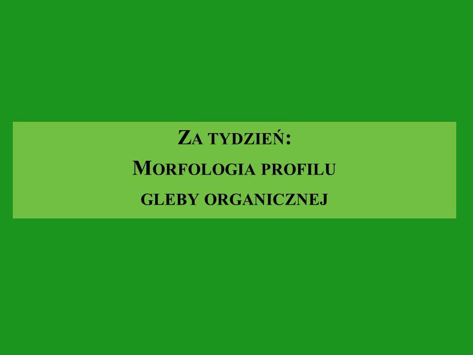 Z A TYDZIEŃ : M ORFOLOGIA PROFILU GLEBY ORGANICZNEJ