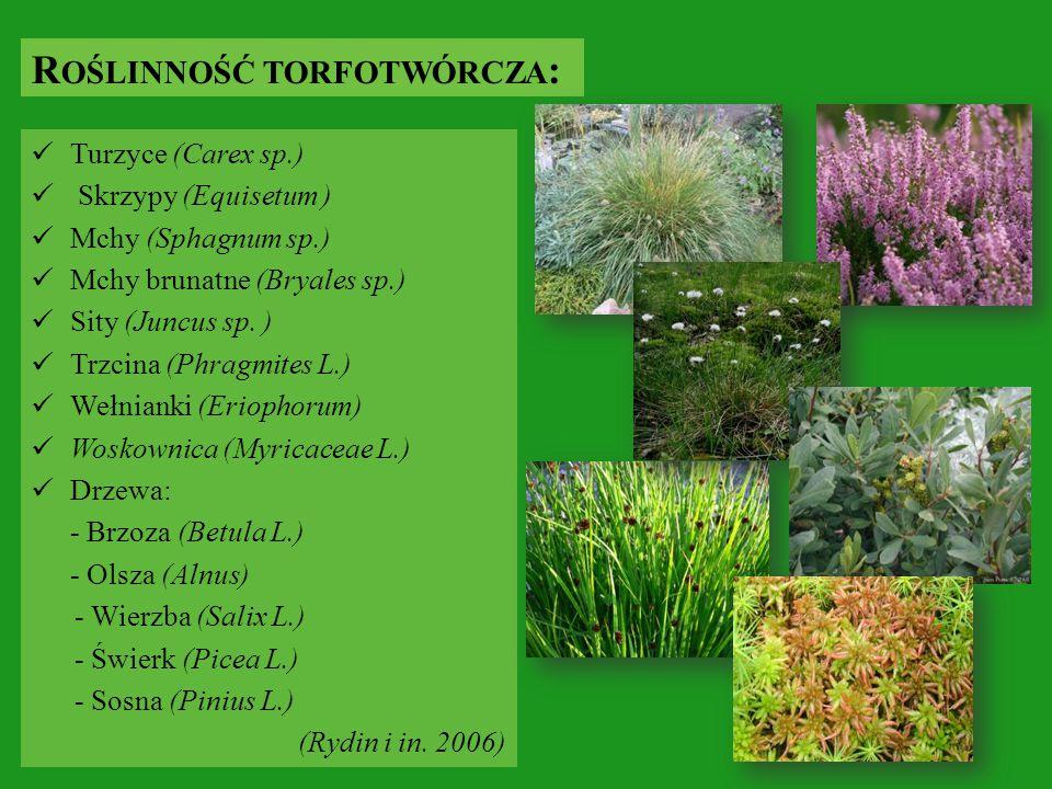 Turzyce (Carex sp.) Skrzypy (Equisetum ) Mchy (Sphagnum sp.) Mchy brunatne (Bryales sp.) Sity (Juncus sp. ) Trzcina (Phragmites L.) Wełnianki (Eriopho
